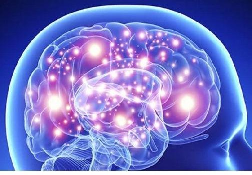 Ljilja mozak